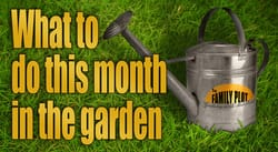 What to do this month in the garden